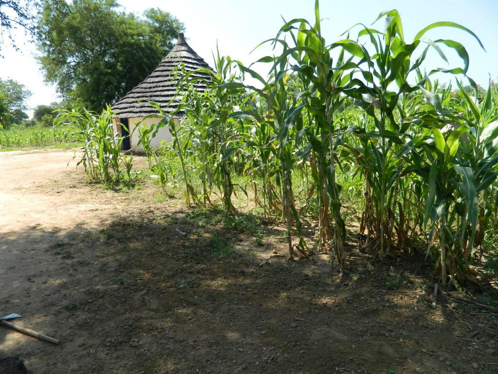 VHSS Community Agriculture